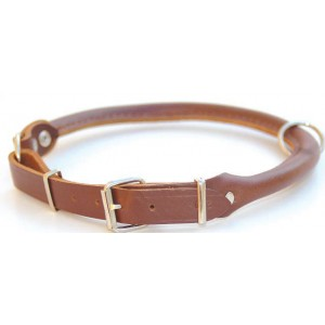 collier chien cuir chasse